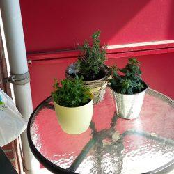 Lente: plantjes op het balkon